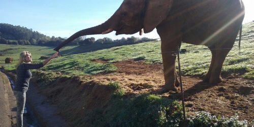 Actividades de Cabarceno elefante
